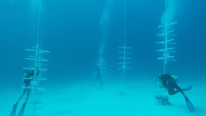 Jóvenes mexicanas usan novedosa técnica para restaurar arrecifes