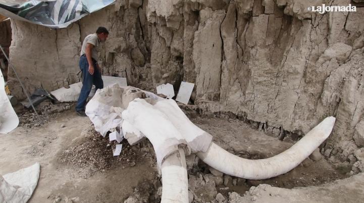 Hallazgo paleontológico más importante de México, a 10 km de Santa Lucía