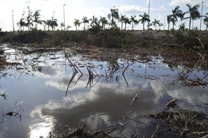 Demandan frenar el daño ambiental en Tajamar
