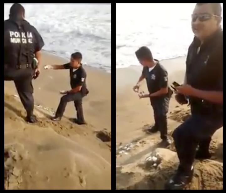 Captan en video a policías de Manzanillo saqueando nido de tortuga
