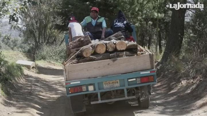 Se incrementa tala ilegal; La Jornada conversó con alguien que se dedicó a esa actividad